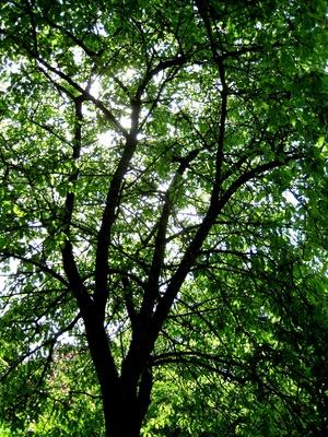 Blaetterbaum