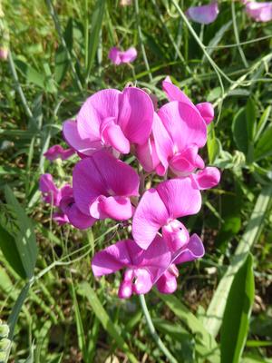Blumen am Wegrand / 1