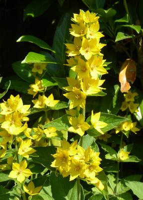 Blumen am Wegrand / 5