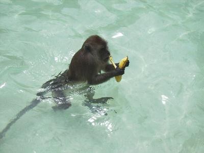 Für eine Banane gehe ich gerne ins Wasser