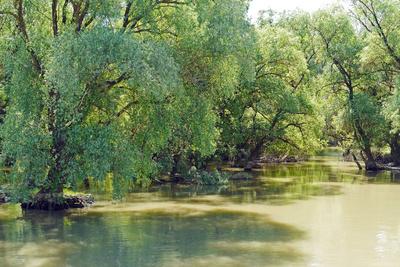 Im Donaudelta . . . .
