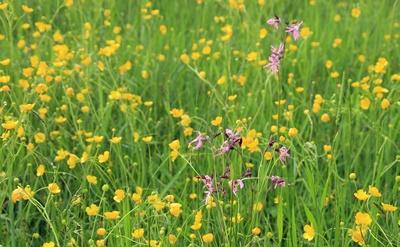 Natur im Sindelsdorfer Moor 02