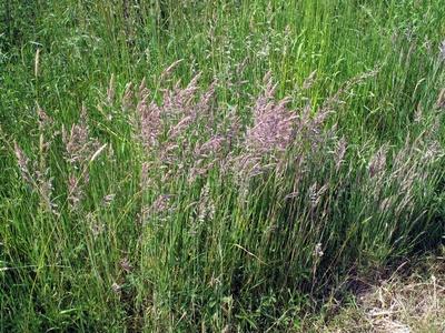 Bunte Gräser auf dem Feld