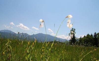 Natur im Loisach-Kochelsee-Moor
