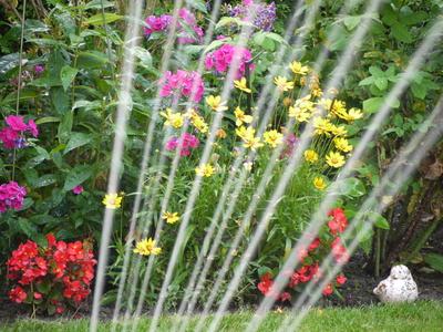 Hochsommer im Garten