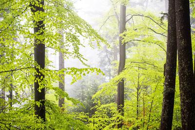 Frühlings-Laubwald