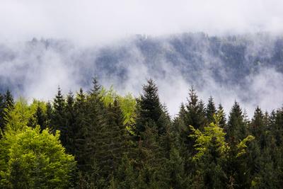 Laub- und Nadelwald in Frühlingsfrische