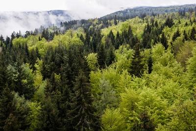 Laub- und Nadelwald in Frühlingsfrische 4