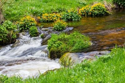 Quellbach im Schwarzwald 2