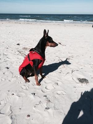 Hund am Strand (Baywatch)