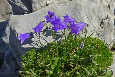 «Glockenläuten» am Felsenweg