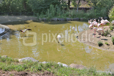 Flamingo Teich