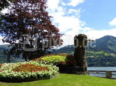 Blumen-Pfau in Zell am See
