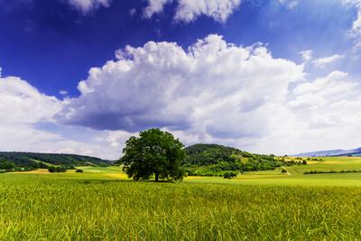 Sommer-Landschaft