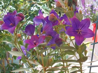 Zarte Blüten_2