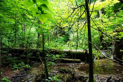 Feuchtgebiet im Sommerwald