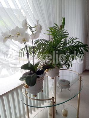 Orchidee und Palme