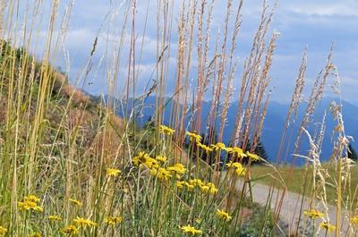 Sommer im Brixental 01
