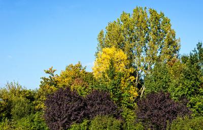 Der Herbst liegt auf der Lauer