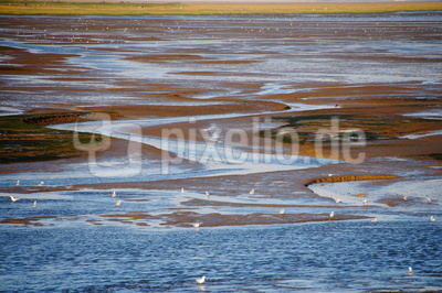 Nachmittags im Wattenmeer