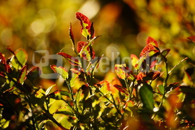 leuchtendes Herbstlaub
