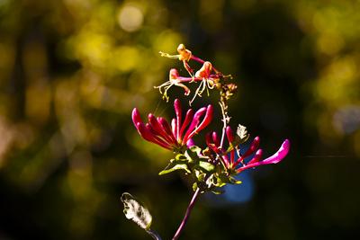 Blüte im Abendlicht