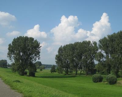 Rheinaue zwischen Strom und Damm
