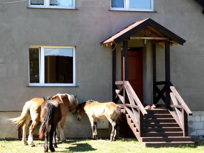Da steht nicht nur ein Pferd vor der Tür!