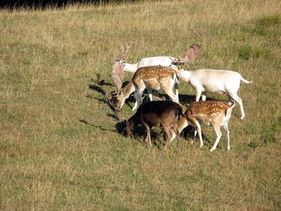 Schöne Herde