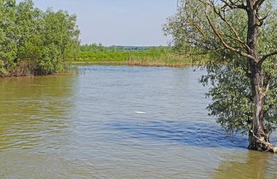 In den Auenwäldern des Donaudeltas