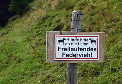 frei laufendes Federvieh...