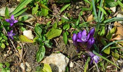 Die Flora der Bergwelt