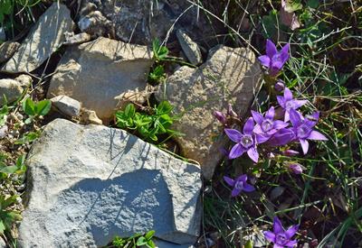 Die Flora der Bergwelt 02