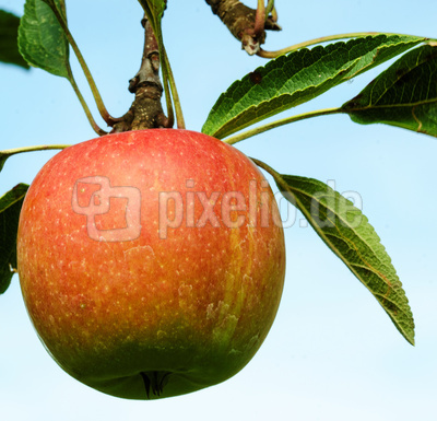 Rote Apfelbäckchen