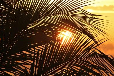 Sun of Jamaika
