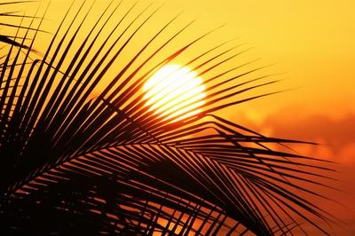 Sun of Jamaika II