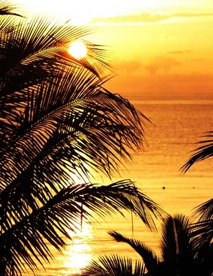 Sun of Jamaika III