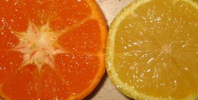 Mandarine und Zitrone, Teilansicht
