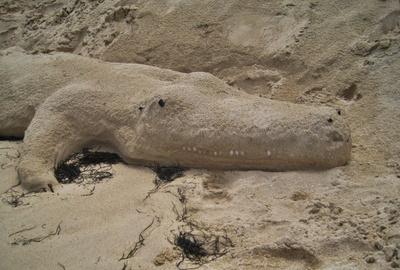 Alligator aus Sand