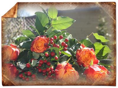 Rosen im Bilderrahmen