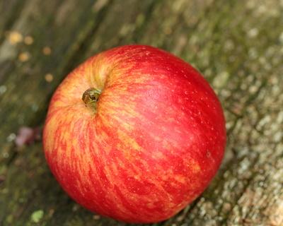 mein lieblingsapfel