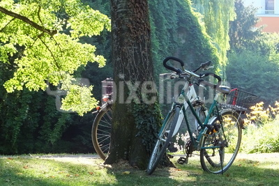 Fahrrad im Park
