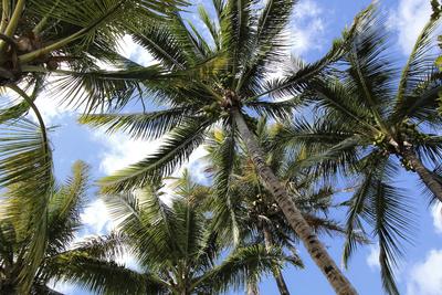 Froschperspektive auf Palmen
