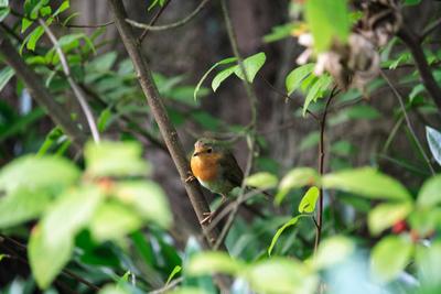 Vogel im Busch