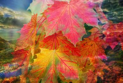 Herbstlich Foto Collage