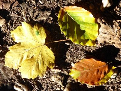 Erste Herbstblätter auf der Erde