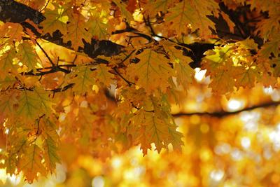 Farbiges Herbstlaub II
