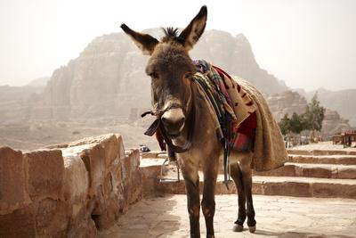 Packesel in Jerusalem