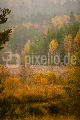 Herbstmorgen im Sumpfwald