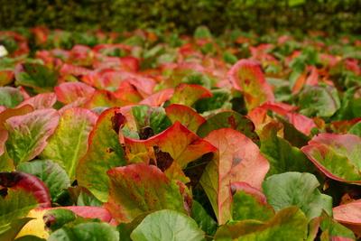 Farbverlauf von bunten Blättern